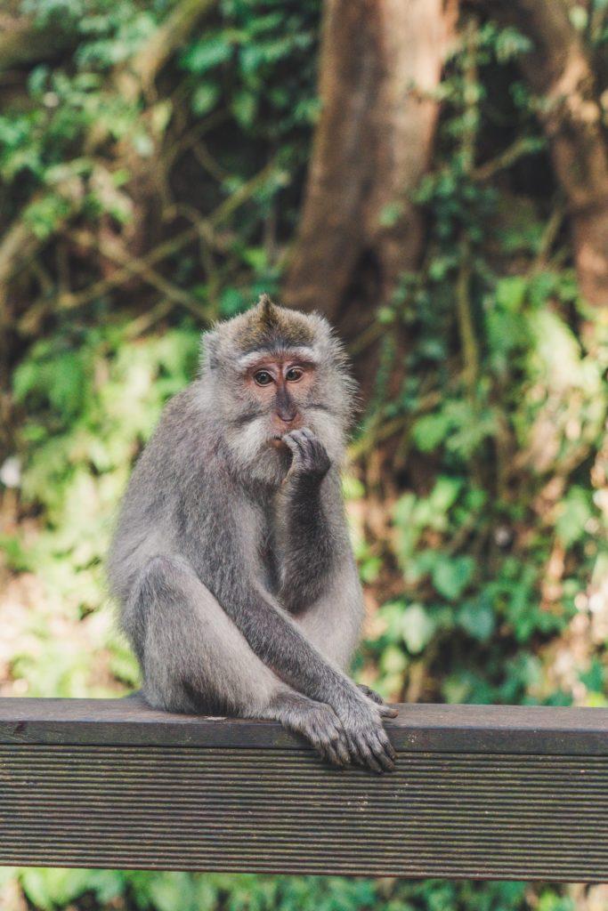 考える 猿