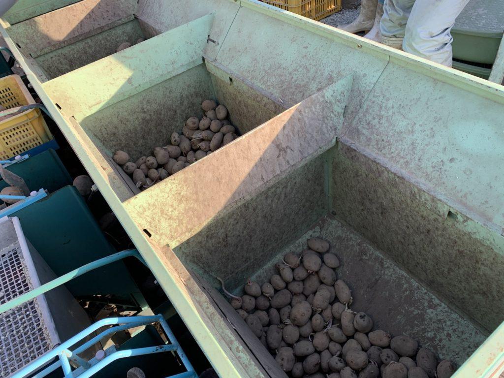 種芋 植え付け