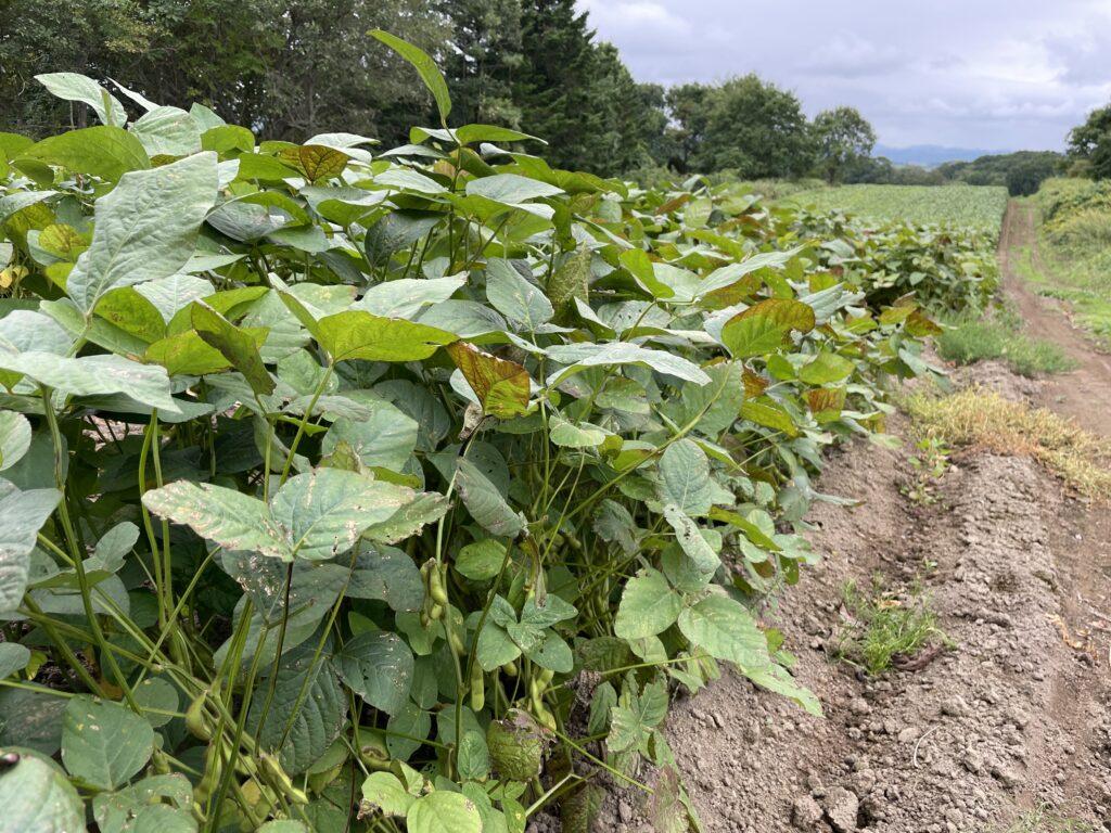北海道農家の枝豆農場
