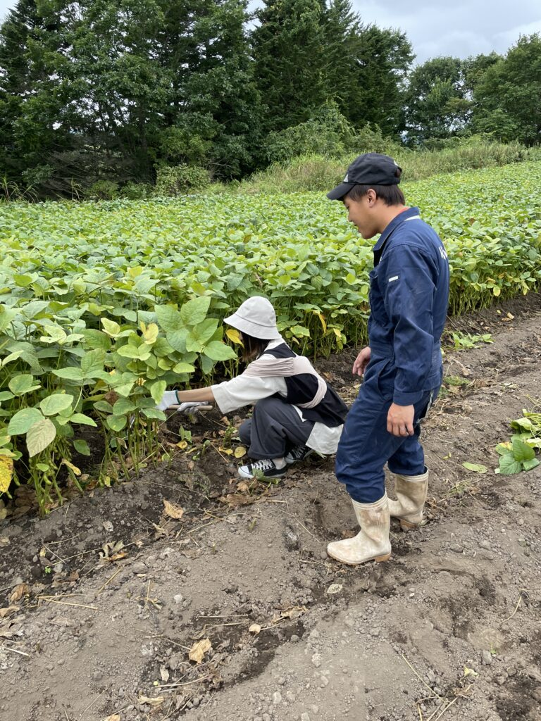北海道農家が教える枝豆収穫体験